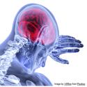 Session de formation virtuelle - Les services policiers tenant compte des traumatismes : Comprendre la neurobiologie des traumatismes